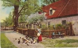4102z5: Alte Farb- AK Dresden 1910, Bauernhof Mit Hühnern - Fermes