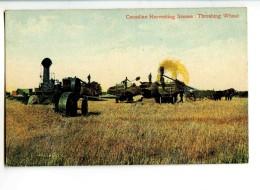 18488   -  Canadian Harvesting Scenes : Threshing Wheat   -   Canada - Autres