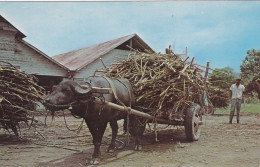 Sugar Ox Cart , TOBAGO , W. I. , 50-60s - Trinidad
