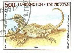 Rettili Del Tagikistan Phrynocephalus Helioscopus - Tagikistan