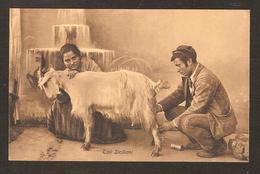 - ZIPI  Siciliani ( Traite D'une Chèvre - Lait  ) - Palermo
