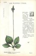 LES PLANTES UTILES Lot De 5 Cp  5 Scans - Blumen