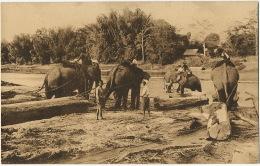 Siam  Elephant Carrying Wood Missions Freres De St Gabriel Edit Thill Nels - Thaïlande