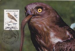 Carte-Maximum FRANCE N° Yvert 2338 (CIRCAETE) Obl Sp Ill Seloncourt (Ed Terrasse) - 1980-89