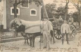 ATTELAGE BASQUE  1904 - France