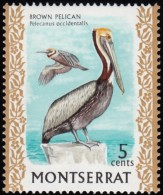 MONTSERRAT - Scott #235 Pelecanus Occidentalis / Mint NH Stamp - Montserrat