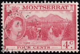 MONTSERRAT - Scott #132 Picking Tomatoes (*) / Used Stamp - Montserrat
