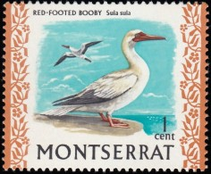MONTSERRAT - Scott #231 Sula Sula (*) / Mint NH Stamp - Montserrat