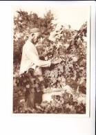 Middle Central Asia Russian Empire TURKMENISTAN TYPES  ASKHABAD Grapes - Turkmenistan