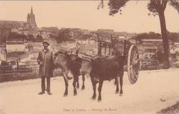 40 -- Landes -- Attelage De Boeufs - Non Classés
