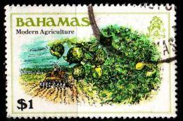 BAHAMAS [1980] MiNr 0466 ( O/used ) Pflanzen - Bahamas (1973-...)
