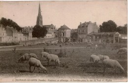 Cpa 85 FONTENAY-LE-COMTE   Moutons Au Pâturage  A L'arrière-plan, La Rue Du Port Et L'église , Peu Courante - Fontenay Le Comte