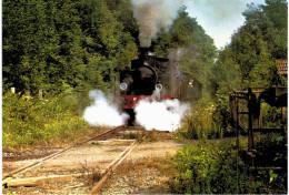 Petit Train De La Vallée De La Doller - Ligne Cernay Sentheim - Dans La Forêt Entre Aspach Et Burnhaupt Passage à Niveau - Frankreich