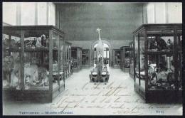 TERVUEREN - Musée - Salle Des Mammifères - Circulé - Circulated - Gelaufen - 1905. - Tervuren