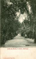 JARDIN DES PLANTES ST PIERRE MARTINIQUE - Martinique