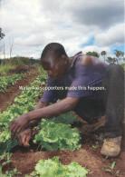 Farmer, Mozambique Postcard Unposted - Mozambique