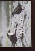 Belgie Buzin Vogels Birds 2459 6fr Maximumkaart RR Blanco - 1985-.. Birds (Buzin)
