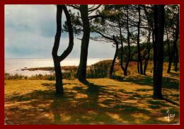 Dept 29  Beg Meil - Les Pins Sur Les Dunes      (san Recto Et Verso ) - Beg Meil
