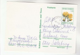 1991 Teeibach AUSTRIA 4.50s FLOWER Postal STATIONERY CARD Stamps Cpover Flowers - Stamped Stationery