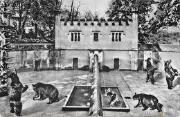 Berne - La Fosse Aux Ours - Bear-Pits - Verlag A. Boss & Co. - Bears