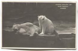 Polar Bear, Polarbar, ZOO Zagreb, Croatia, 1932. - Ours