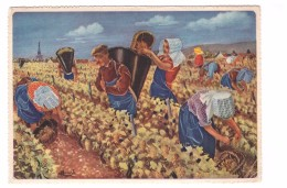 Illustration Illustrateur Homualk Bourgogne Cote Beaune Meursault Pays Vin Blanc Vendange à La Hotte Vin Vignoble Raisin - Homualk