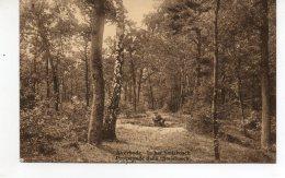 AVERBODE   In Het Smisbosch Promenade Dans  Smisbosch - Scherpenheuvel-Zichem