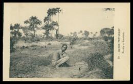 GUINÉ-BISSAU - Recolte De L´arachide. ( Nº 39)  Carte PostalE - Guinea Bissau