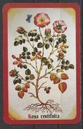 Hungary,   Pharmacy Ad,  Rosa Centifolia,  1999. - Calendari