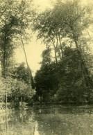 Tahiti Etude Photographique Arbes Et Riviere Ancienne Photo 1910's
