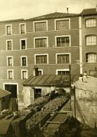 France Paris Jardin Potager Sur Les Toits Ancienne Photo De Presse 1930