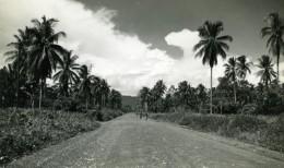 Nouvelle Guinee Route Bordee De Palmiers Nuages Ancienne Photo 1940