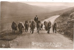 SHETLAND PONIES  On The Road Stamped 1911 So Nice - TTB  Royaume Uni Poeme Alan Scott - Cavalli