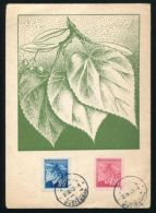 CZECHOSLOVAKIA MAXIMUM CARD LEAVES + BERRIES - Czech Republic
