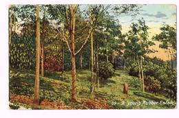 A Young Rubber Estate 1909 - Ceylon (Ceylan) - Timbre/stamp - Sri Lanka (Ceylon)
