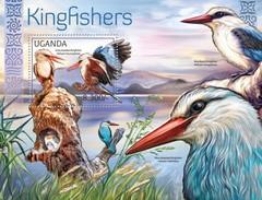 Uganda 2012, Animals, Birds, Kingfishers, BF