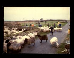 29 - OUESSANT  - Foire Aux Moutons - Ouessant