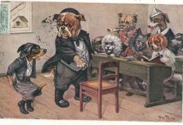 Illustrateur THIELE Chiens Humanidés  à L'école - Basset Teckel, Loulou, Caniche .. - Thiele, Arthur
