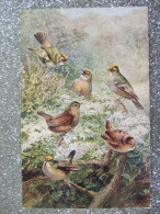 LOT DE 3 BELLES CARTES / SALMON SERIES / COMMON WREN, RING OUSELS & BULLFINCHES - Uccelli