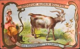 CHOCOLAT GUERIN-BOUTRON - Belle Chromo. - Les Mammifères - La Chèvre - TBE état - Guerin Boutron
