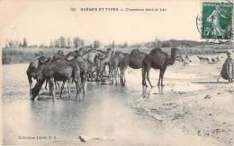 Scènes Et Types - Chameaux Dans Le Lac - Algeria