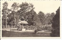 HOOGBOOM: Maison De Repos 'de Welvaart' - Kapellen