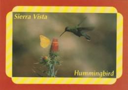 Birds The Hummingbird - Birds