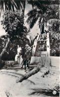 Scènes Et Types - Un Puits Dans La Palmeraie (âne) - Algeria