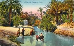 Scènes Et Types - Passage De L'Oued (âne) - Algeria