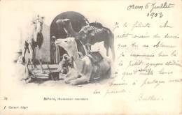 Scènes Et Types - Méhara, Chameaux Coureurs - Algeria