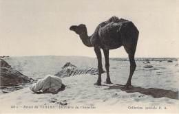 Scènes Et Types - Désert Du Sahara, La Prière Du Chamelier - Algeria