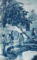 Scènes Et Types - Au Bord De L'Oued - Algeria