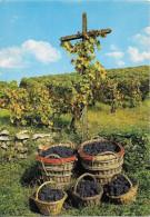 FRANCE - CHAMPAGNE - Paysages Champenois - Le Vignoble En Automne - Vignes