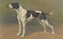 POINTER DOG ~ FINE OLD ARTISTIC Postcard - Honden